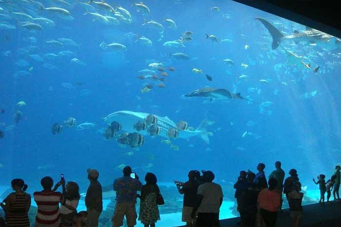 Sejarah Pemeliharaan Ikan