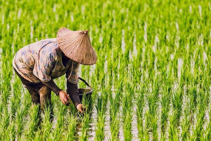 Sektor Pertanian Pada Masa Orde Baru